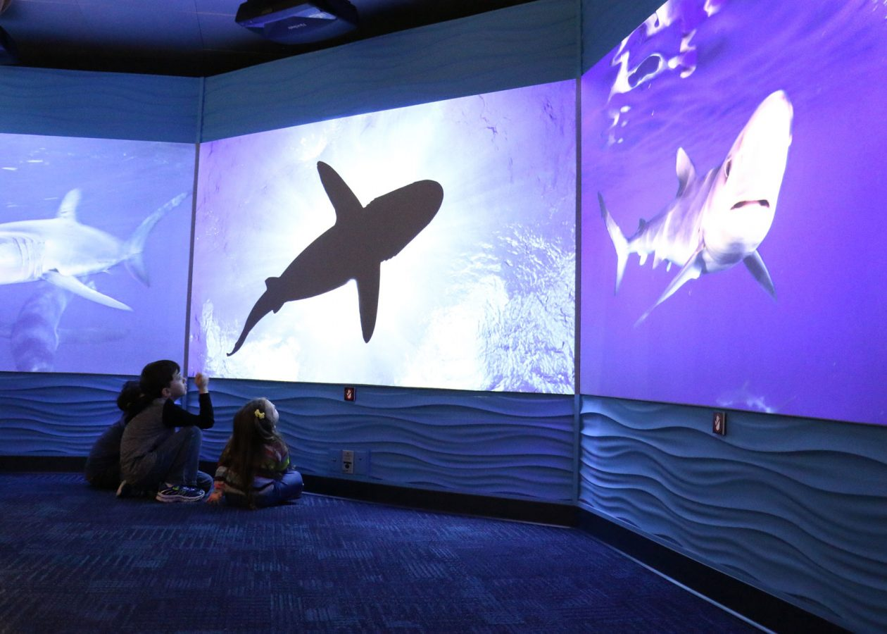 kids watch video of sharks