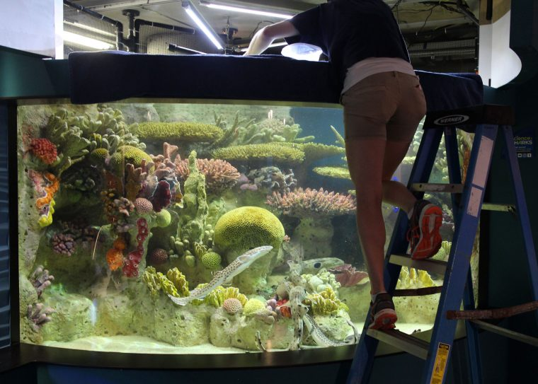 aquarist feeds sharks in Science of Sharks exhibitq