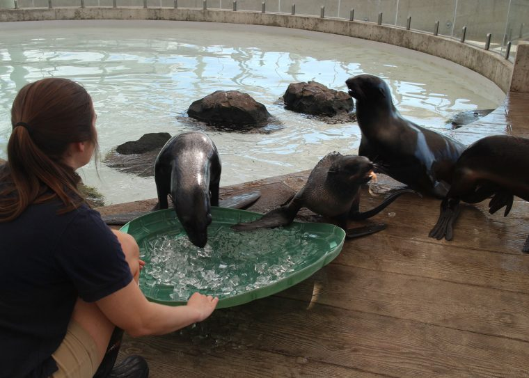 Trainer plays with seals and ice trays