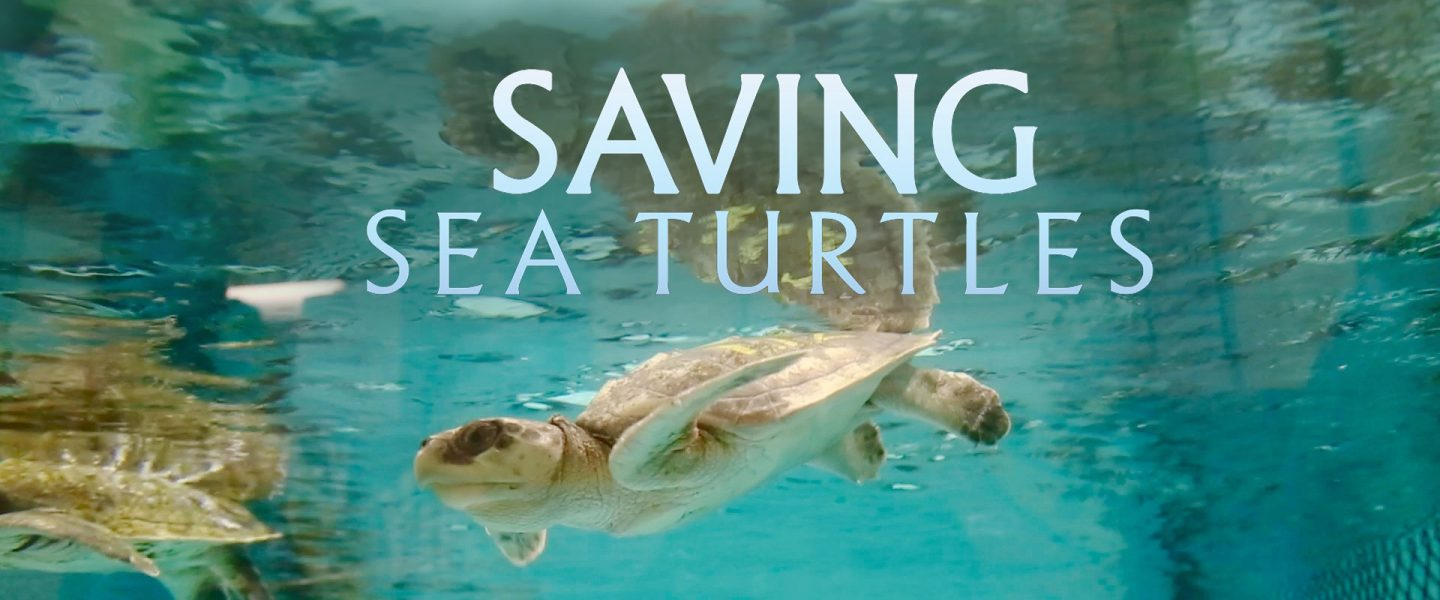 saving sea turtles movie art