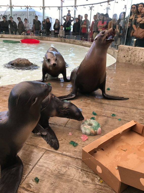 seals and sea lions and jello donut crumbs in empty box