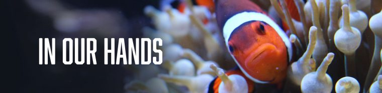 "clownfish with ""in our hand"""