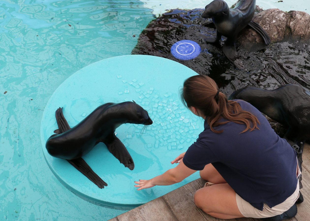 trainer and luna play on float