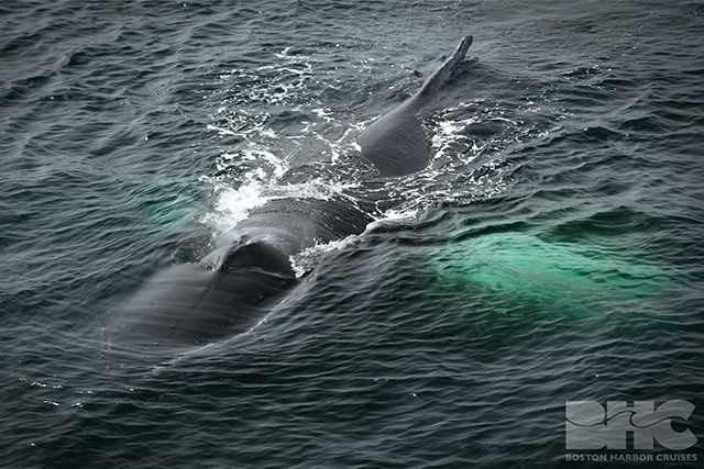 close encounter with humpback whales