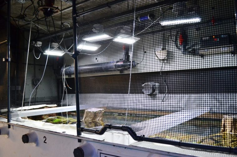 behind the scenes of the ancient fishes exhibit