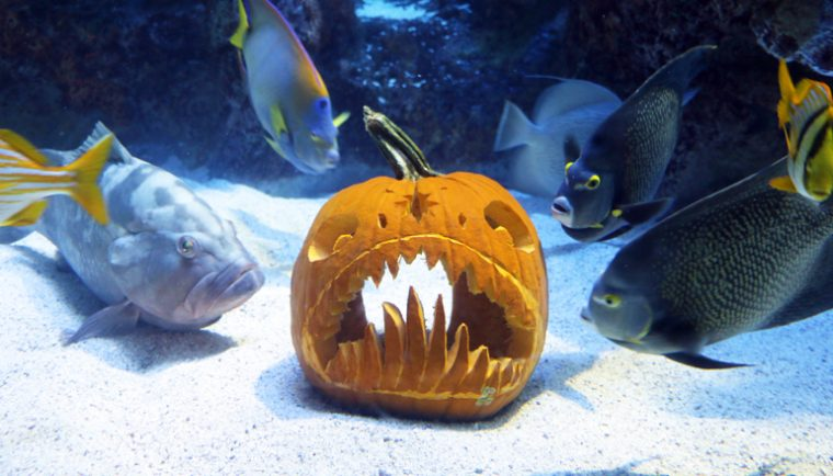 pumpkin in Giant Ocean Tank Fish Fun and Fright 2017