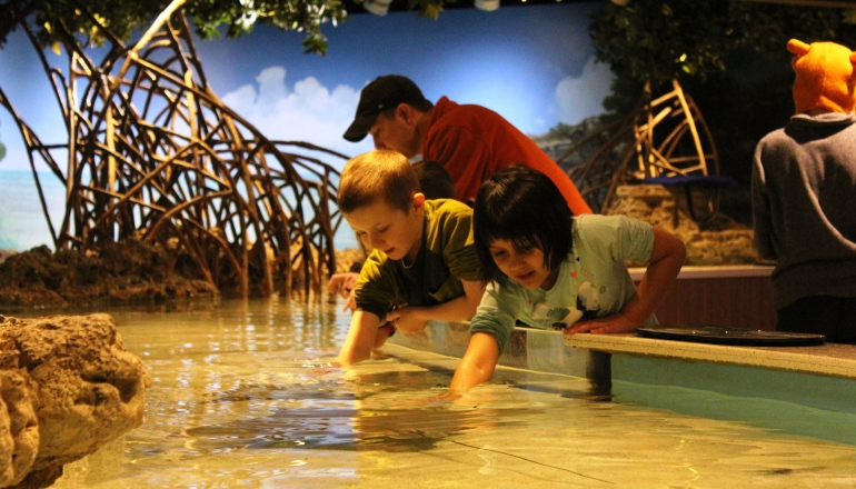 children with hands in shark and ray touch tank