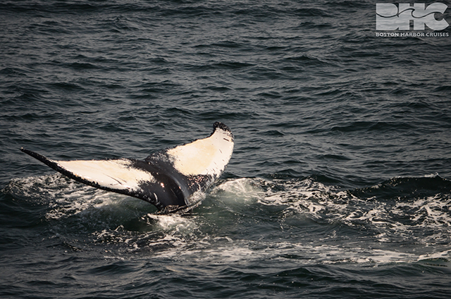scenes from a whale watch