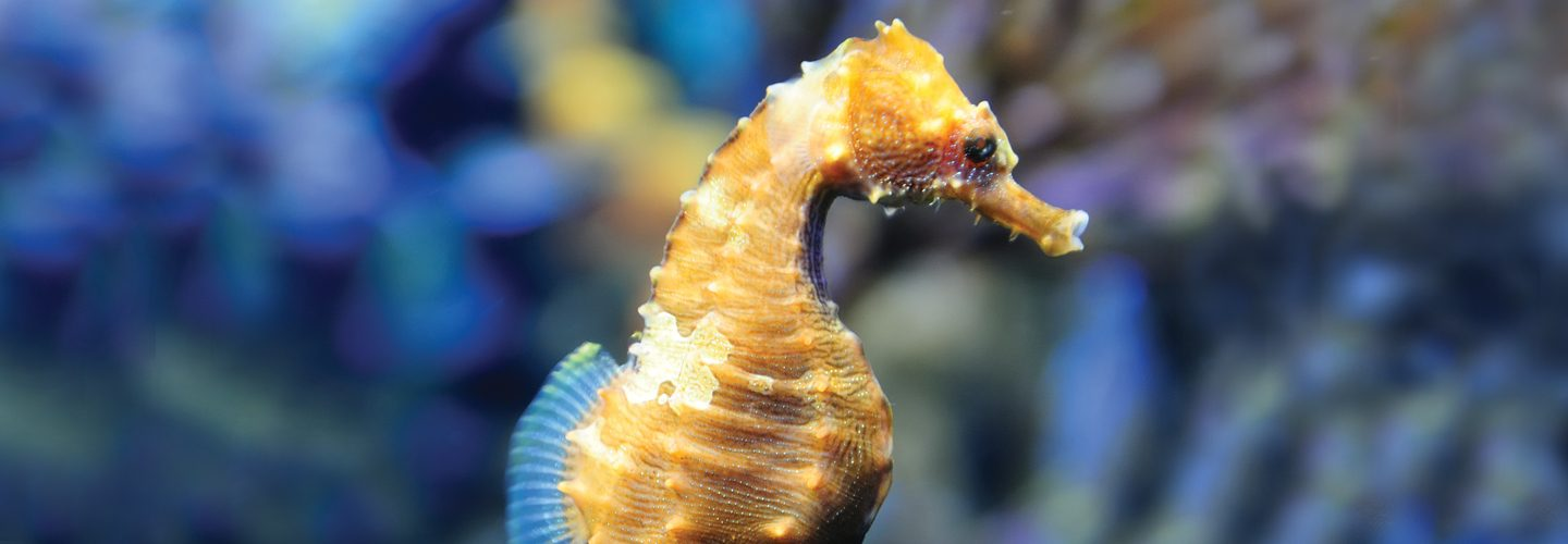 seahorse for dive in hero