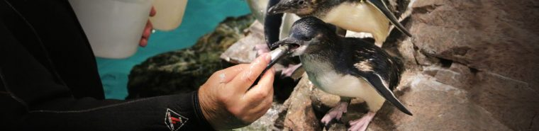 penguin with fish in mouth