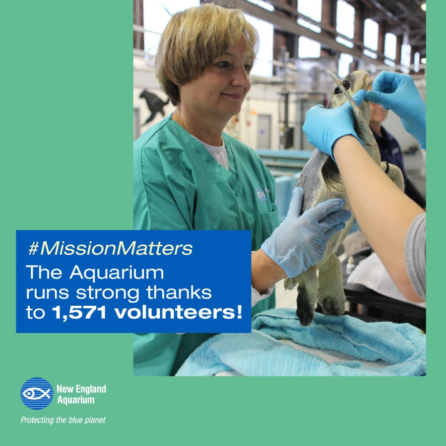 infographic: the aquarium runs strong thanks to 1,571 volunteers