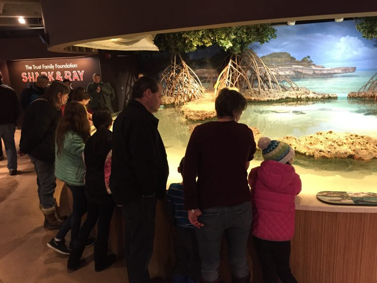 Dive In attendees at shark and ray touch tank December 2017