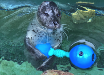 toy created for marine mammals