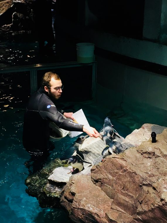 penguins being fed on holiday