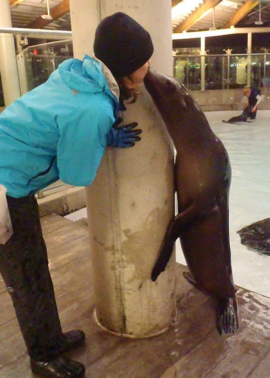 sea lion gives trainer a smooch