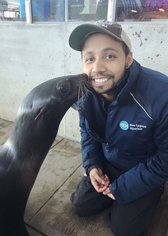 fur seal gives trainer a smooch