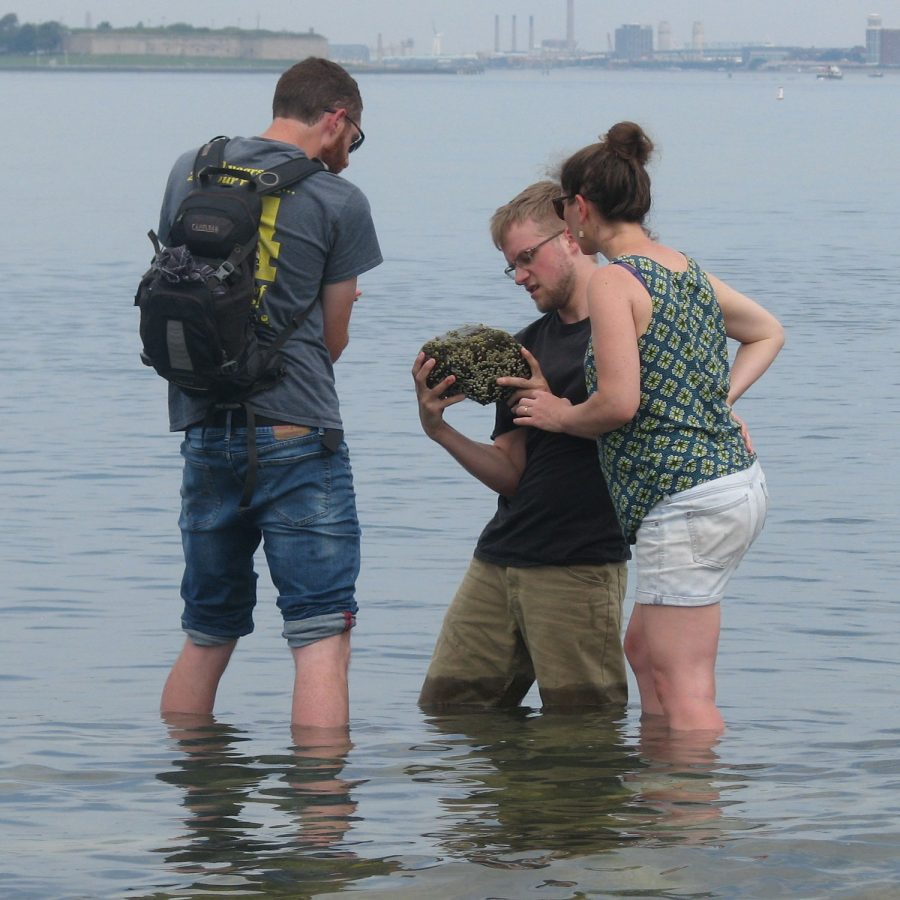 teachers standing in shallow water