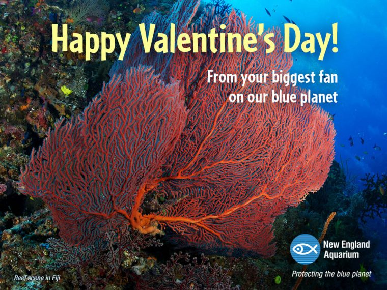 sea fan valentine's card