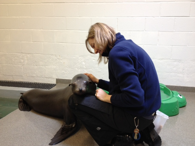 sea lion with head on trainer's knee