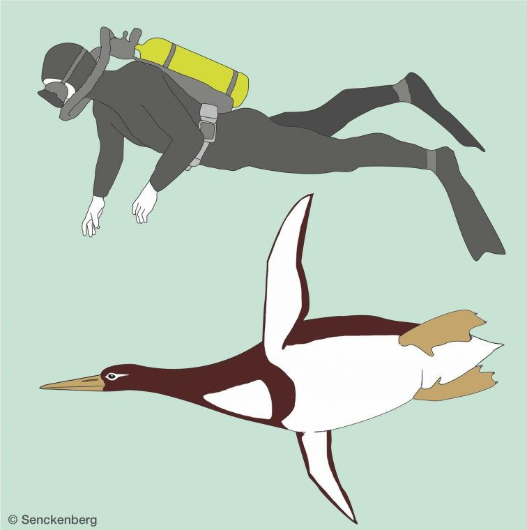 illustration of giant penguin swimming next to scuba diver