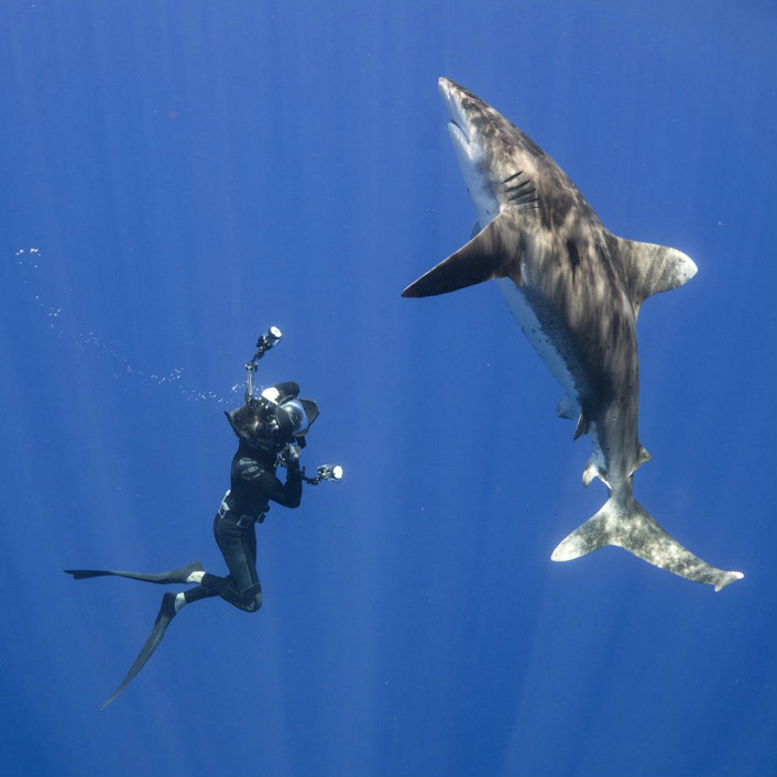 Andy Mann diving with shark