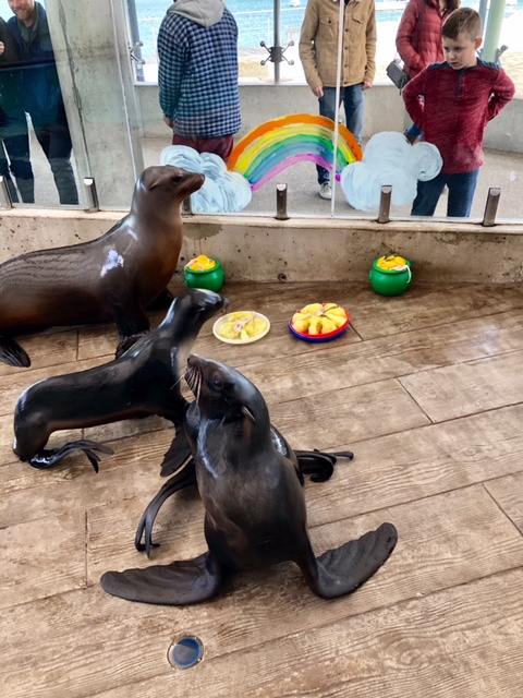 sea lions and fur seals with enrichment