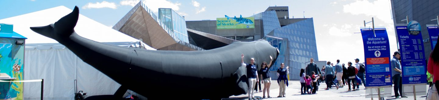 inflatable North Atlantic Right Whale outside 2017 New England Right Whale Festival