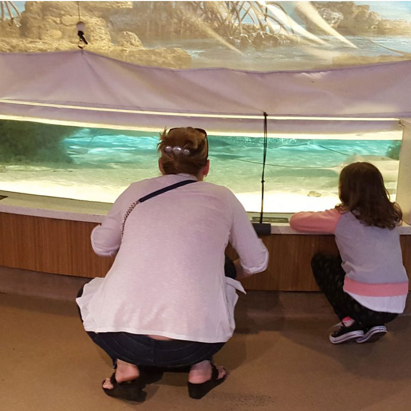 members looking at rays through netting in shark and ray touch tank