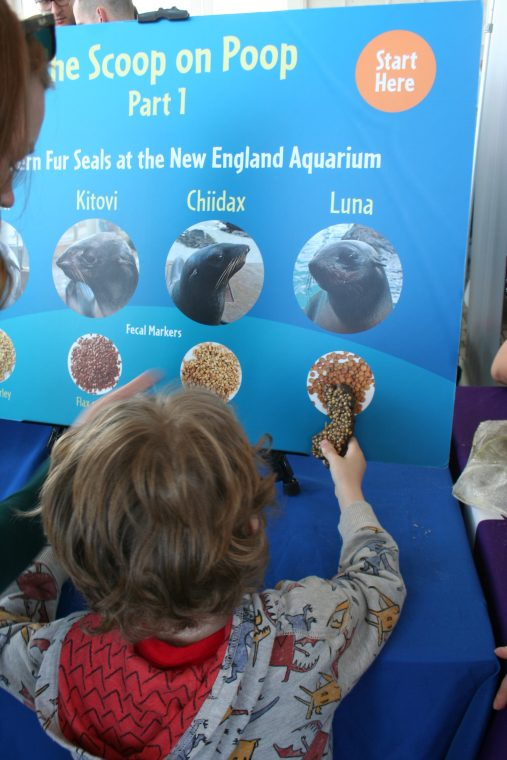 A World Oceans Day 2018 visitor tries ta match the seal poop sample with which seal created it.