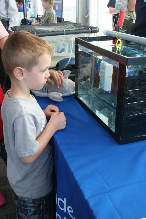 A World Oceans Day 2018 visitor looks at a shark egg.