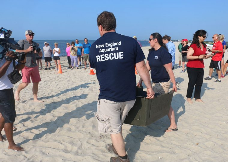 rescuers carry kennel with turtle ready for release