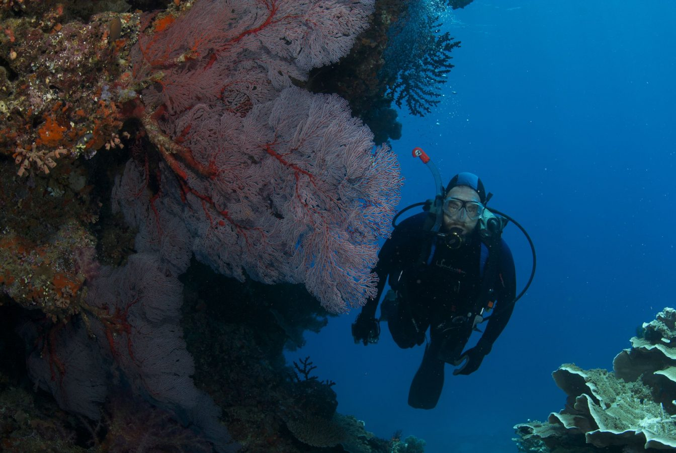 Fiji Expedition diver
