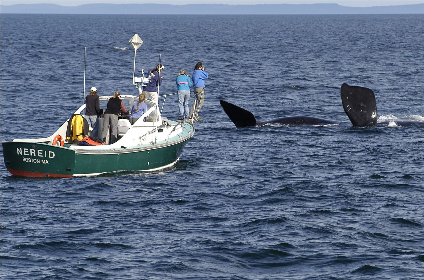 New England Aquarium researchers view North Atlantic right whales