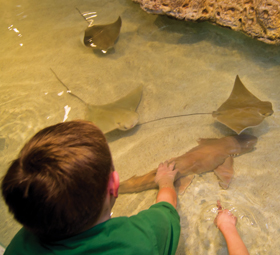 child petting shark in shark and ray touch tank