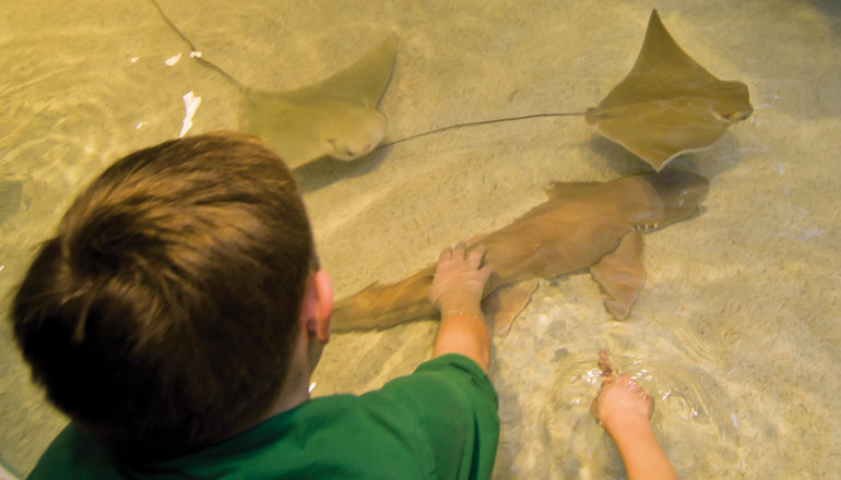 little boy touches shark in interactive tank