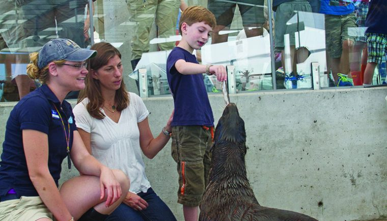 Visitor feeds fur seal a fish