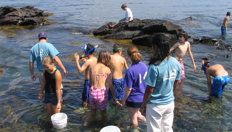 A class of students tidepooling