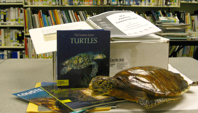 Edcuation kid for teacher about turtles