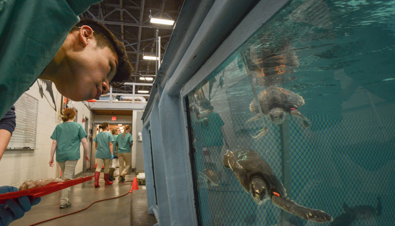 scientist study sea turtles behind the scenes