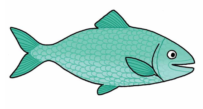 drawing of fish