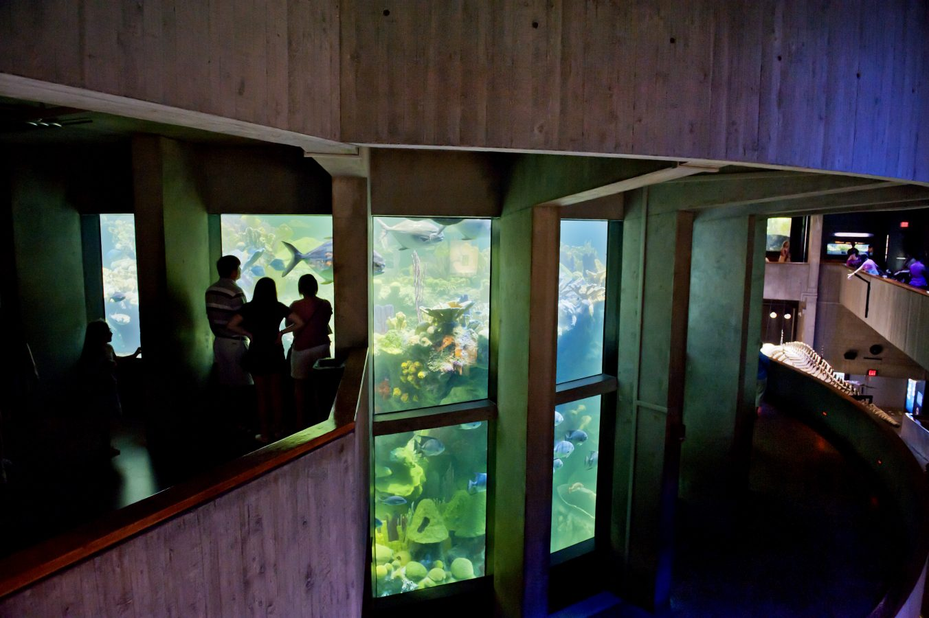 Visitors view giant ocean tank