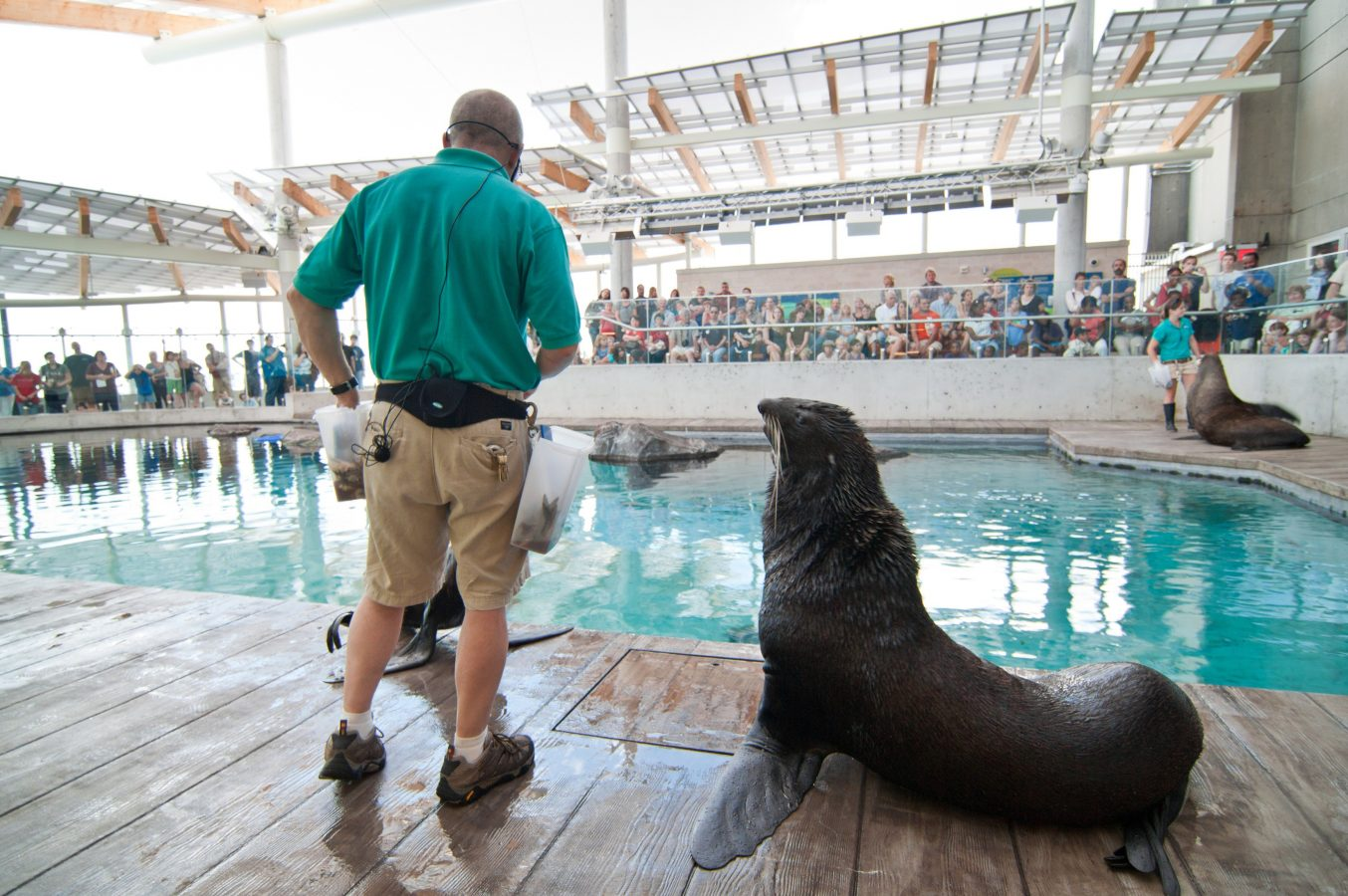 Training show of sea lions