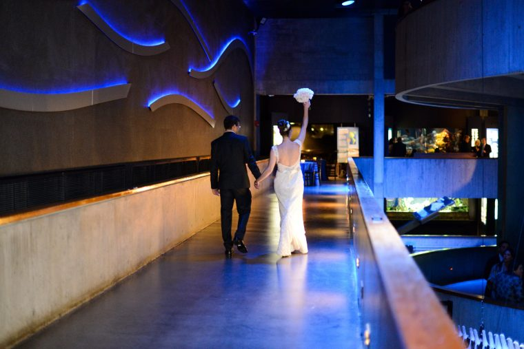 newly weds strut through aquarium