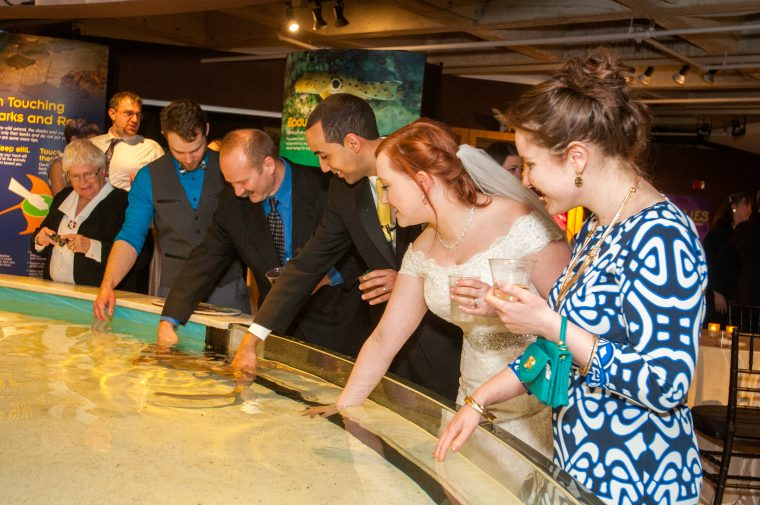 wedding party and guest pet string rays in interactive tank