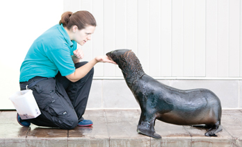 Trainer with fur seal