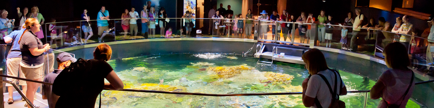 Guest circle around the top of the Giant Ocean Tank