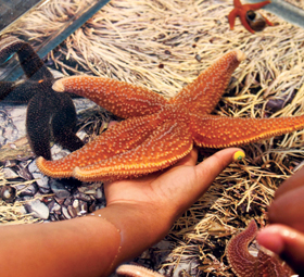 Onsite explorer classes touch sea star