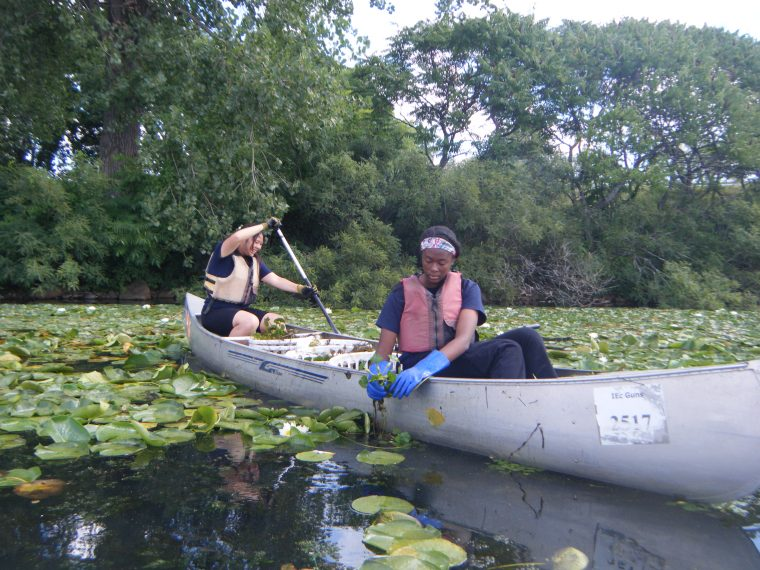 teens in canoe collect invasive weeds from water