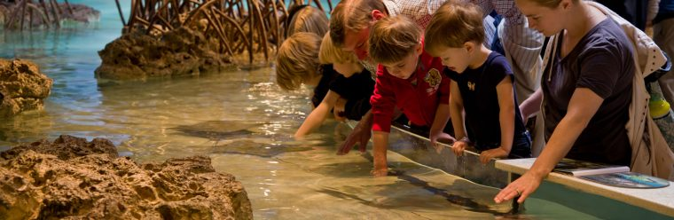 visitors enjoying the shark and ray touch tank