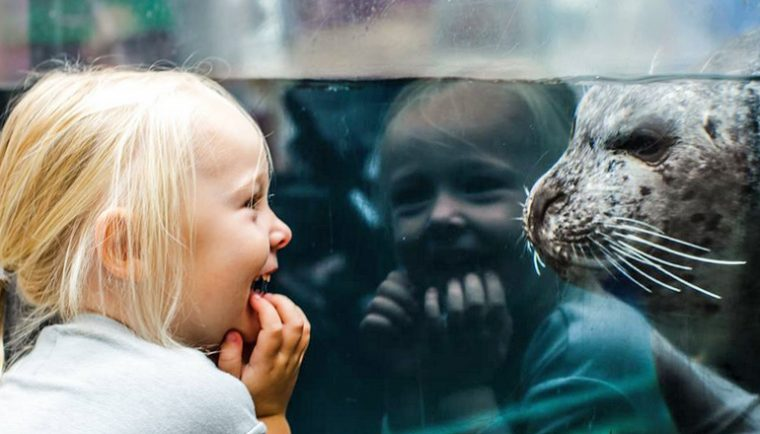 Little girl laughs at the site of a seal